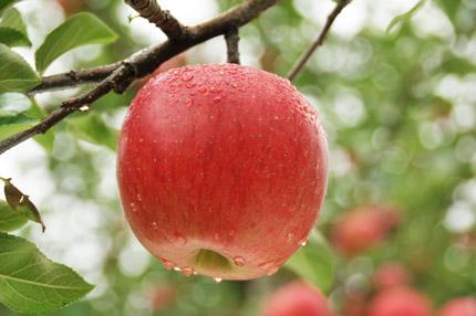 完熟りんご